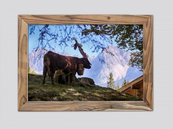 Aufgeputzte-Kuh-Alm-Altholzrahmen