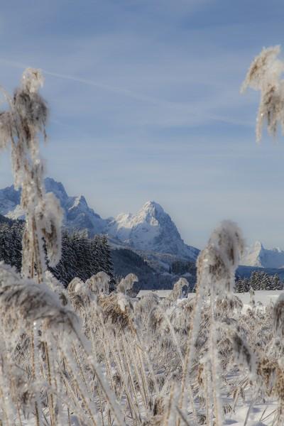waxenstein-winter