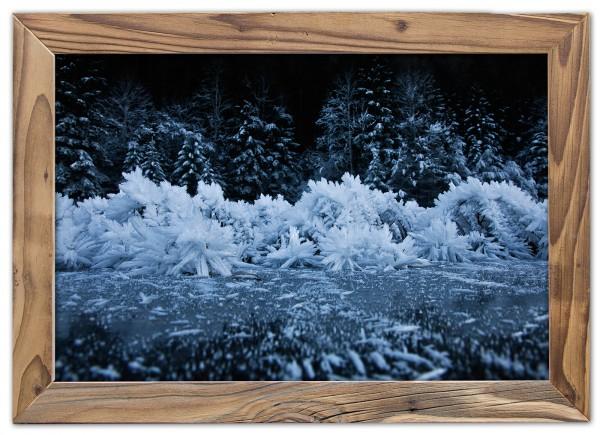Eisbäume im Altholzrahmen