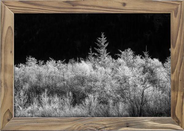 Waldblick-schwarzweiss-Altholzrahmen
