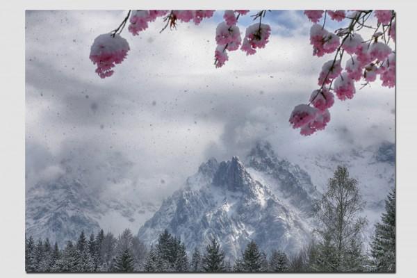 Tischset Kirschblüte im Schneetreiben