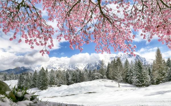 verschneiter Kirschbaum am Wildensee