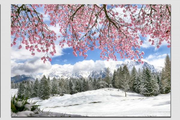 Tischset Kirschblüte und verschneiter Karwendel