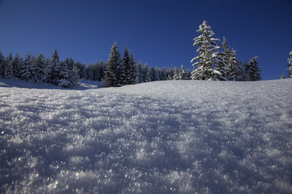 winterwald-hohen-kranzberg