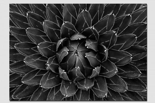Stoffset Geometrie der Natur in schwarzweiß