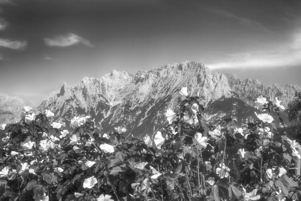 Sommerblumen mit Karwendelblick