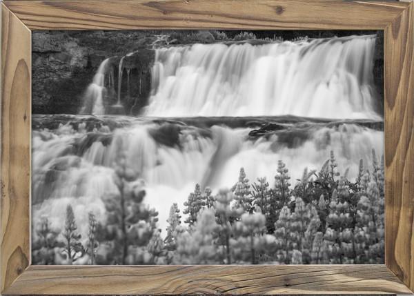 blühender-Lavendel-Wasserfall-Altholzrahmen