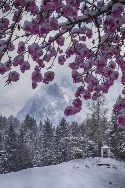 kirschblüte-im-frühjahr