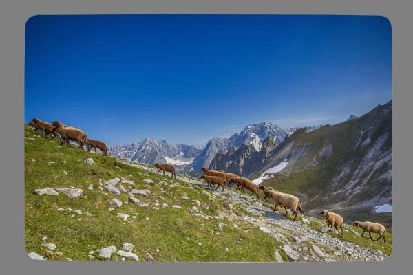 Fußmatte Karwendelschafe