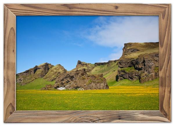 Blühende Wiesen in Islands Süden