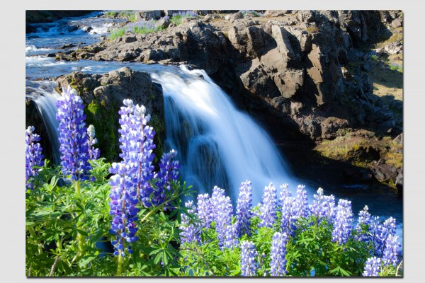 Tischset Lupinen am Wasserfall