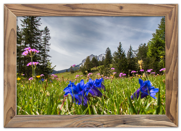 Enzianblüte-im-Altholzrahmen