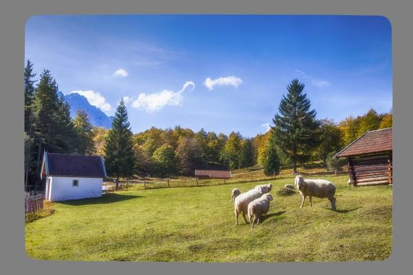 Fußmatte Schafe