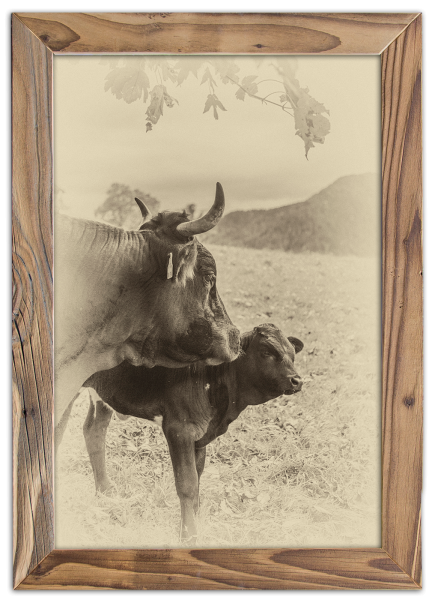Kuh-Kalb-Altholzrahmen