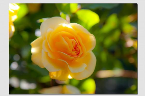 Tischset gelbe Rose