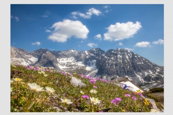 Tischset Frühjahrsblüte an der Tiroler Nordkette
