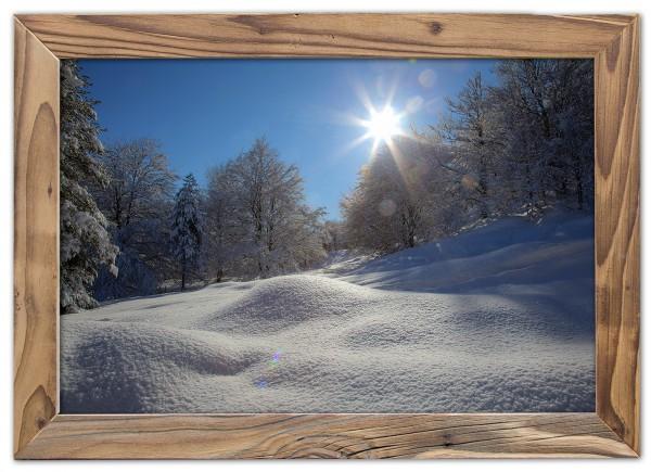 Wintersonne im Buchenwald im Altholzrahmen