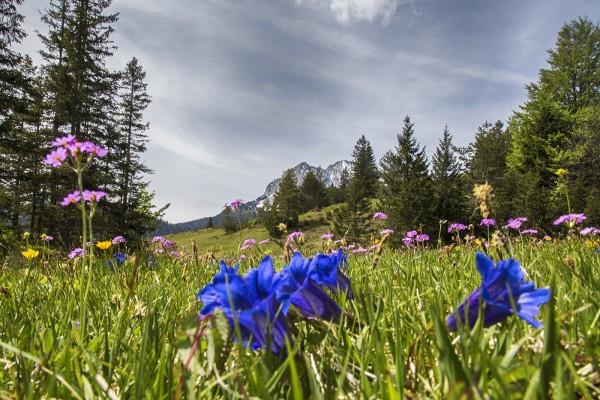 Tassenmotiv Frühlingserwachen