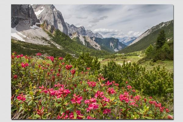 Tischset Alpenrosen im Hinterautal