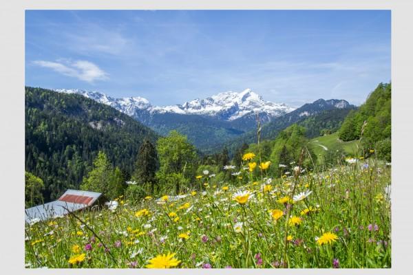 Tischset Frühlingsblüte mit Alpspitze