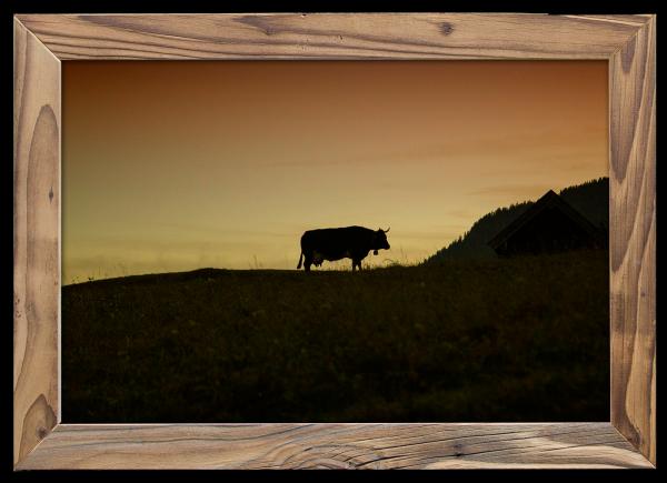 einsame-Kuh-im-Altholzrahmen
