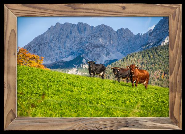 Kühe-Wörner-Altholzrahmen