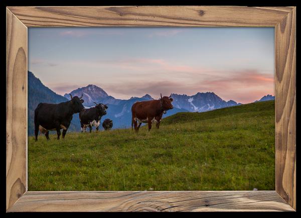 Kuhherde-Tiroler-Nordkette-Altholzrahmen