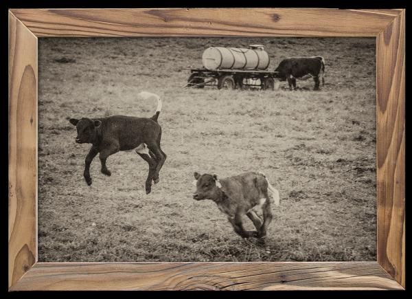 Wilde-Kälbchen-Altholzrahmen