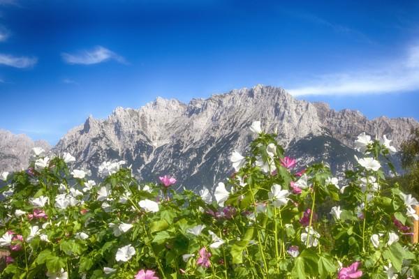 Tassenmotiv Blumen mit Karwendel