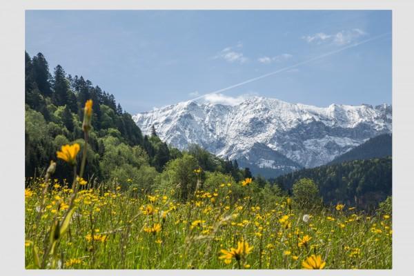 Tischset Arnikablüte bei Wamberg