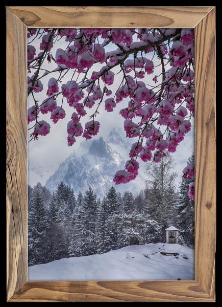 Kirschbaumblüte-im-Frühjahr-Altholzrahmen