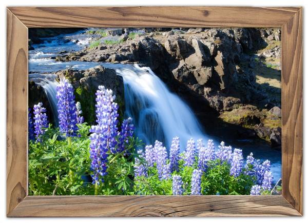 Lupinenblüte am Wasserfall