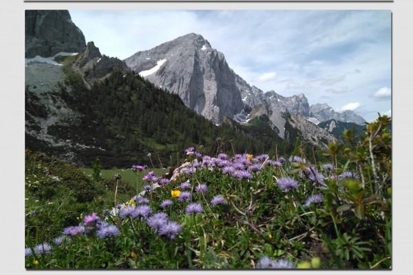 Tischset lila Blumen im Karwendel