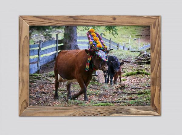 Geschmückte-Kuh-Almwiese-Altholzrahmen