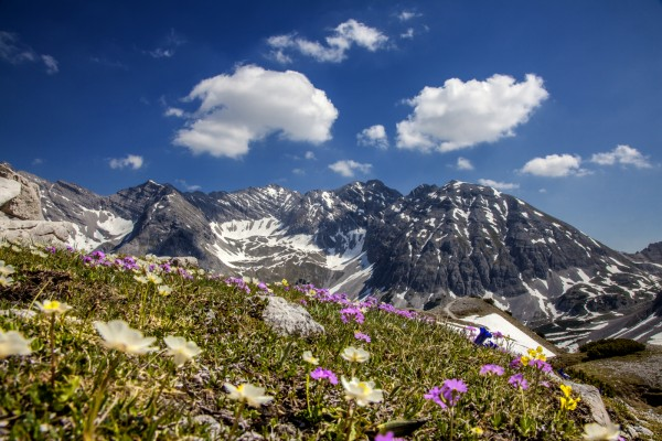 Sommerwiese am Karwendel
