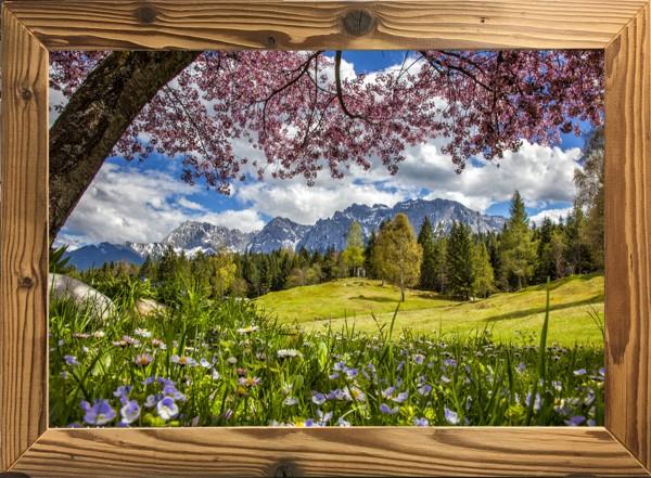 Altholzrahmen-Kirschblüte-am-Wildensee