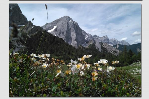 Tischset Silberwurz im Karwendel
