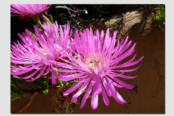 Tischset rosa Blüten