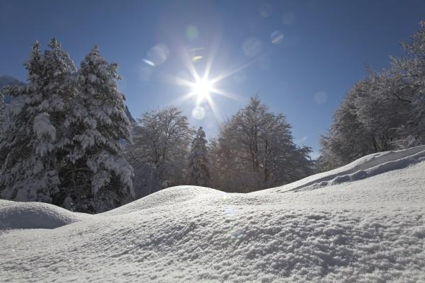 buchenwald-schnee
