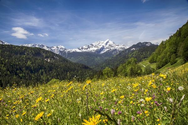 sommerwiese-mit-alpspitze
